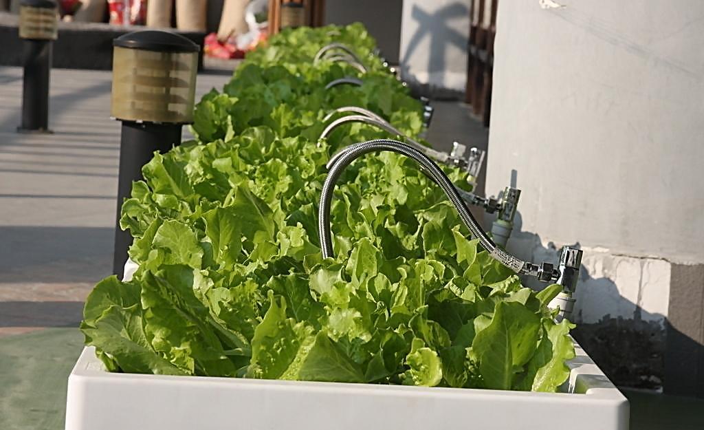 林秀成:倒卖角料起家 如今斥巨资70亿种有机蔬菜