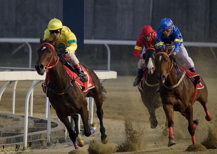 股票|曝赛马运动进展,海南主题最大风口日渐清晰