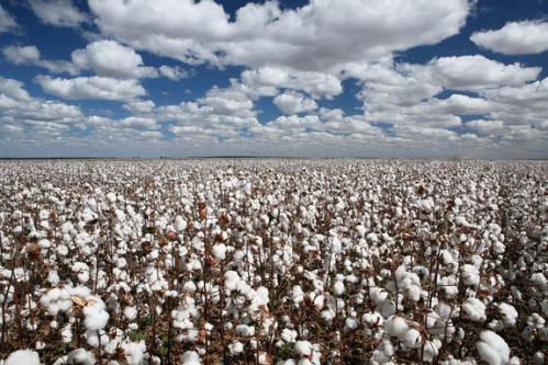 供需两端齐发力,棉纱期货强势涨停