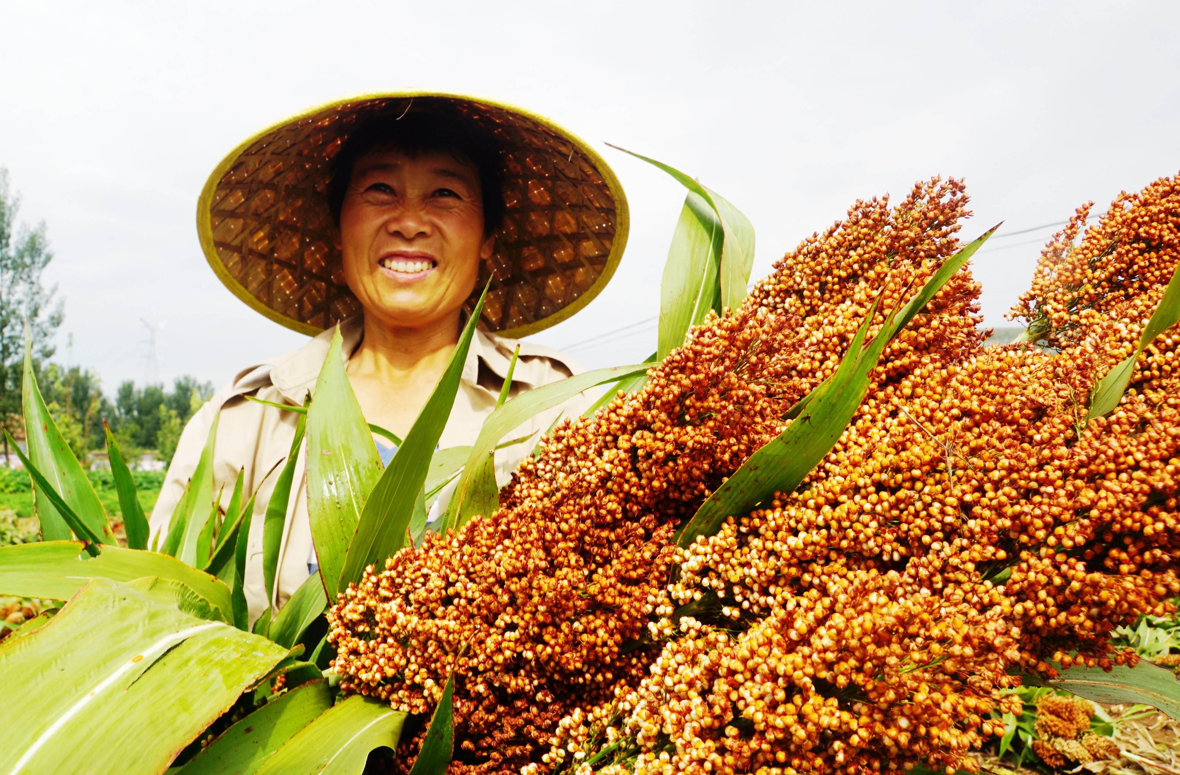 阿里京东联手打造农民丰收节,多家公司早已率先布局