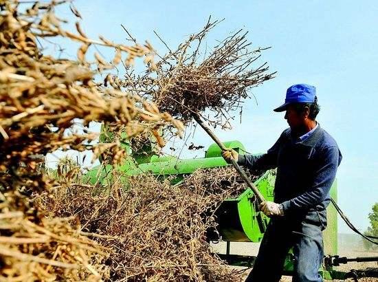 大豆减产,供需紧张,种业龙头望坐享涨价红利