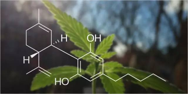 可口可乐之后美国政府也来助攻,大麻商业化再进一步
