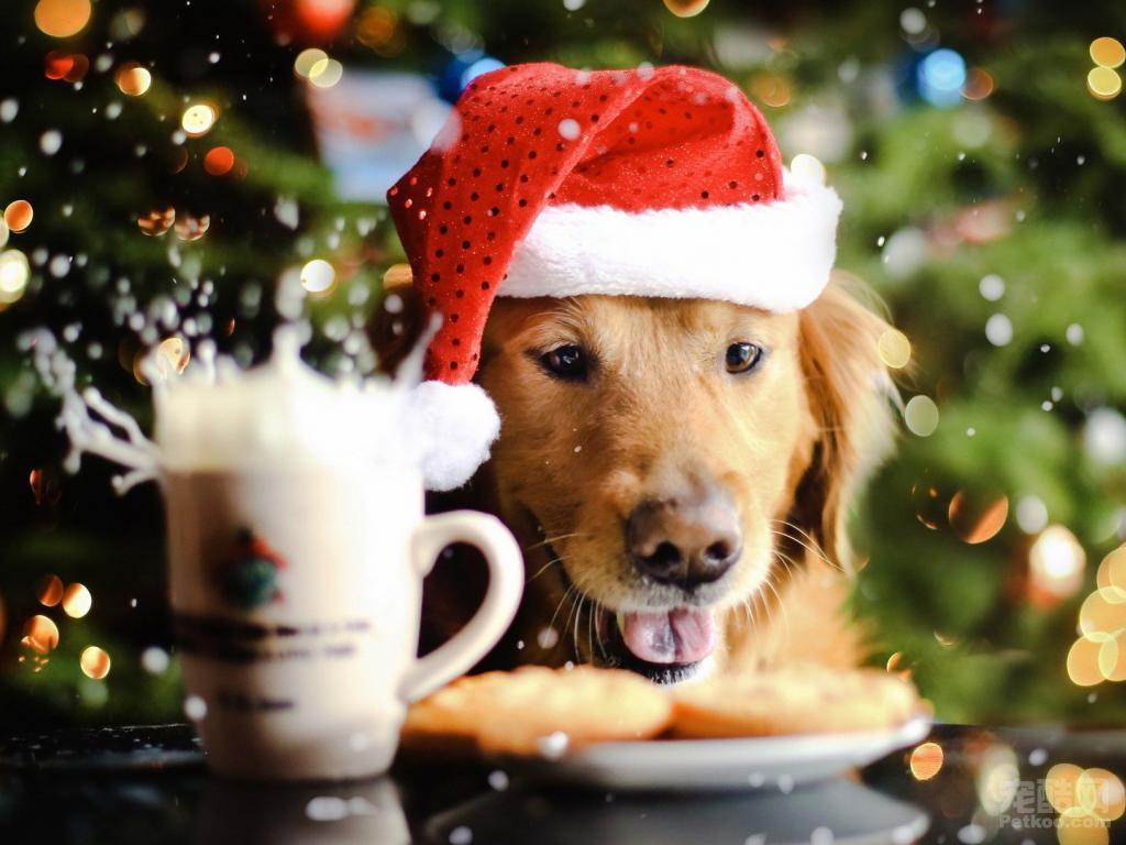 月收入还不如狗?宠物狗代言月入超5万!