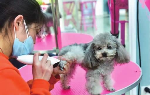 新三板最新消息:宠物经济崛起 这家公司海外营收占比97%