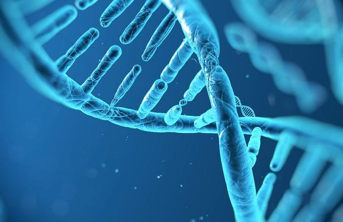 基因检测市场火热 相关机会到底在哪?