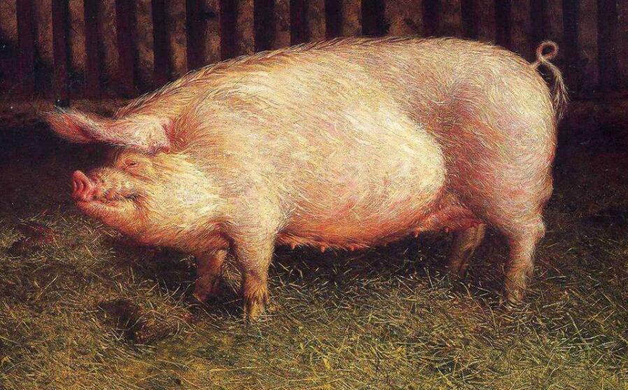 猪肉概念股有哪些 养猪概念股票一览表